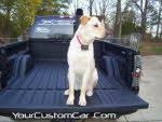 truck bed stake hole shave, rhino liner truck bed, shop dog