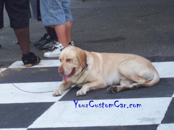 Car Show Dog